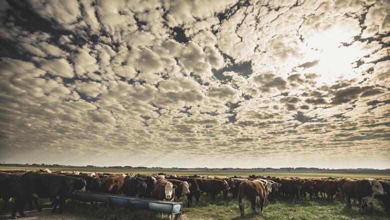 gado-confinamento-pasto-rio-grande-do-sul (Foto: Giovani Rocha/Divulgação )