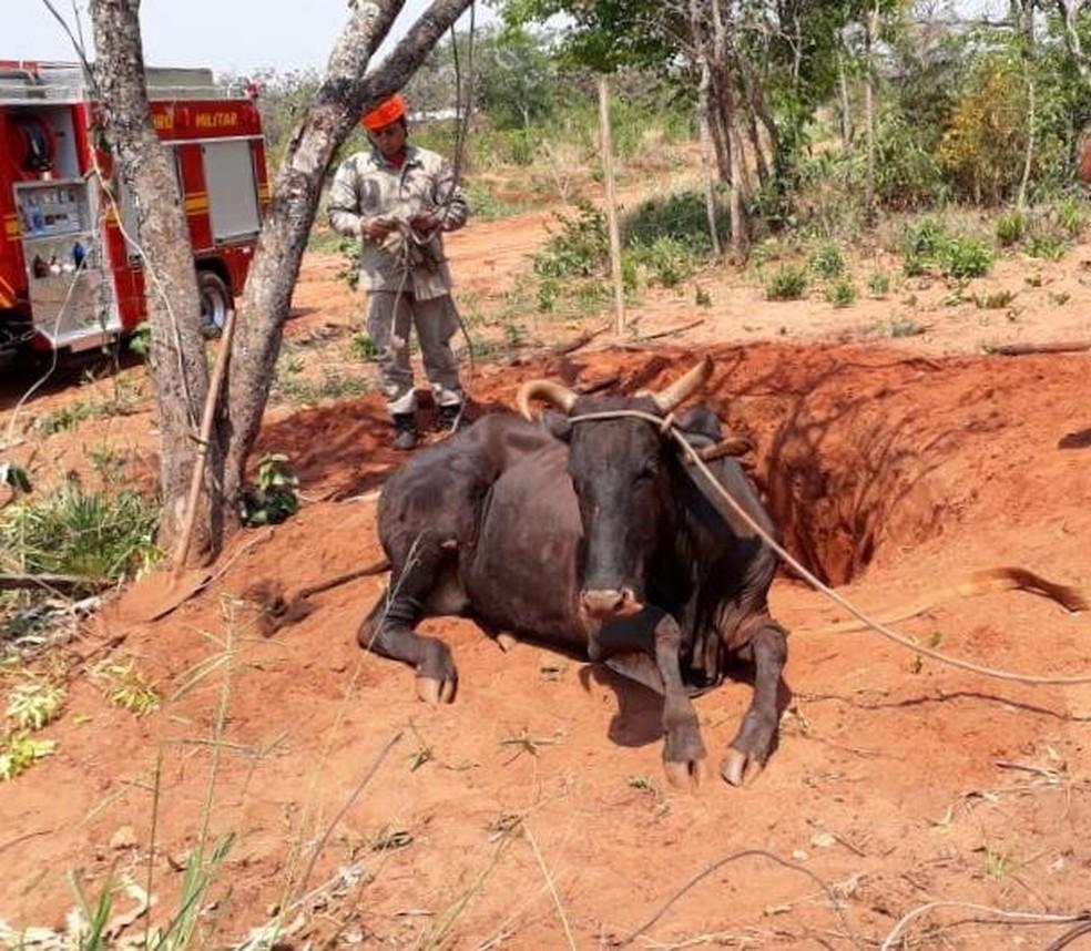 Animal não apresentou ferimentos após ser retirado de buraco de formigueiro, em Campo Grande. — Foto: Osvaldo Nóbrega / TV Morena