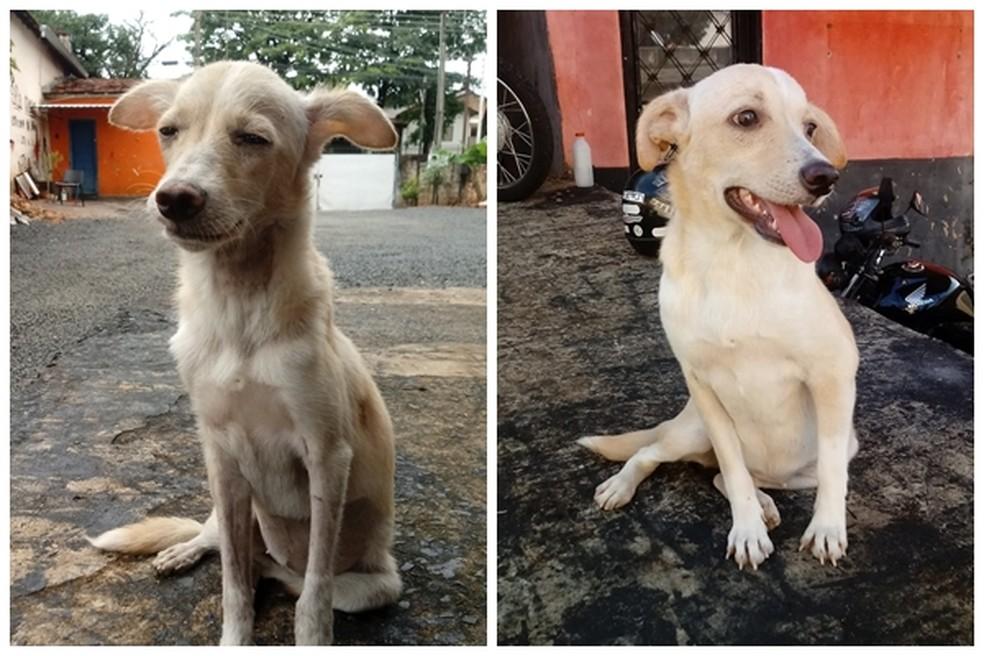 Cachorra foi resgatada à beira da morte; fotos mostram antes e depois  — Foto: Arquivo pessoal/Jeferson Rodrigues