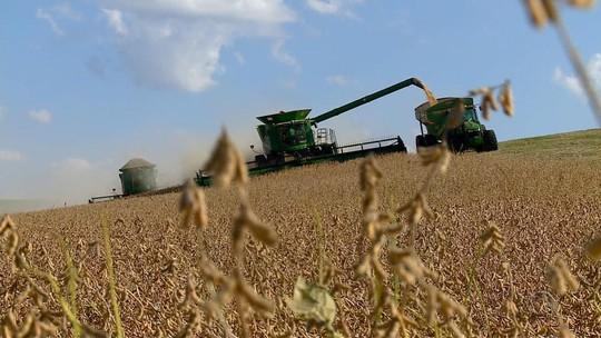 Safra de soja cai 8%, mas produtividade é a segunda maior dos últimos 10 anos no RS
