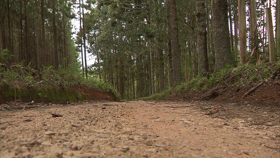 Corpo de Daniel foi encontrado em mata próxima à uma estrada rural de São José dos Pinhais — Foto: Reprodução/RPC