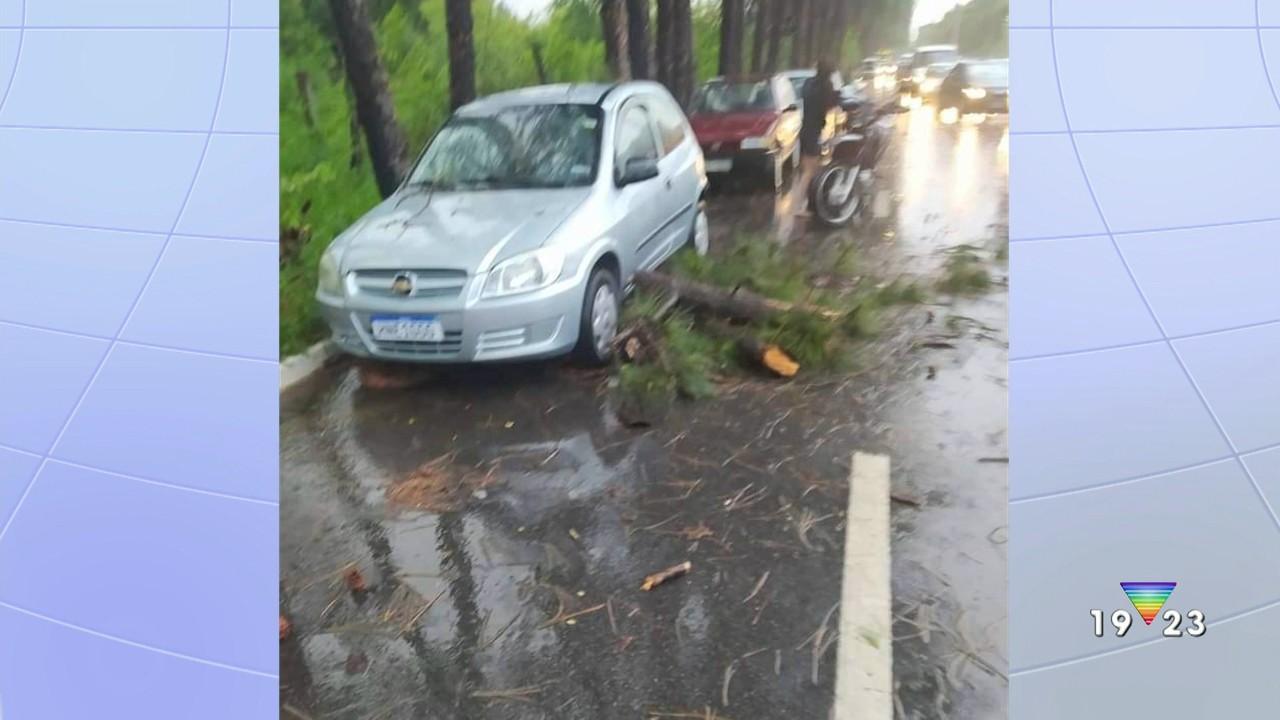 Motociclista é atingido por árvore em São José; chuva provoca transtornos na região