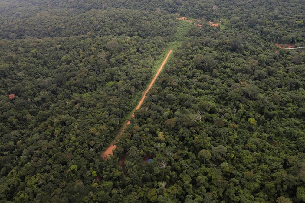 Foto mostra garimpeiros abrindo estrada no Pará no meio da floresta amazônica para levar maquinário para os garimpos. — Foto: Chico Batata/Greenpeace