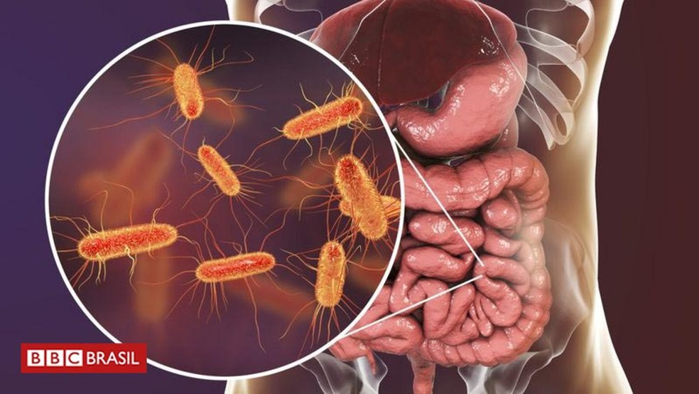 As bactérias que vivem em seu intestino se alimentam de fibras, entre outras coisas — Foto: Getty Images/BBC