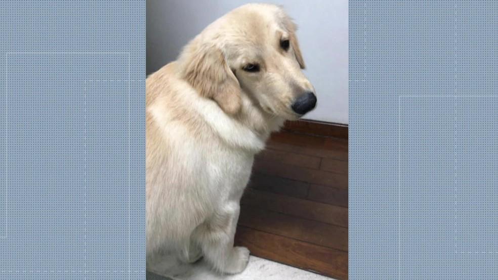 Família não recebe notícias sobre o animal há três dias  — Foto: Reprodução/ Redes sociais