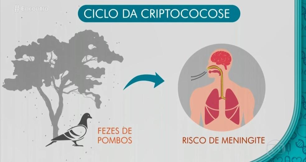 Veja o ciclo da criptococose  — Foto: Arte/TV Globo