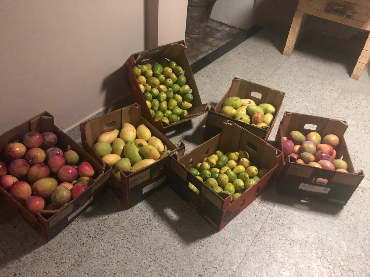 Produtores de frutas do Vale do São Francisco podem ajudar com  doações para famílias carentes
