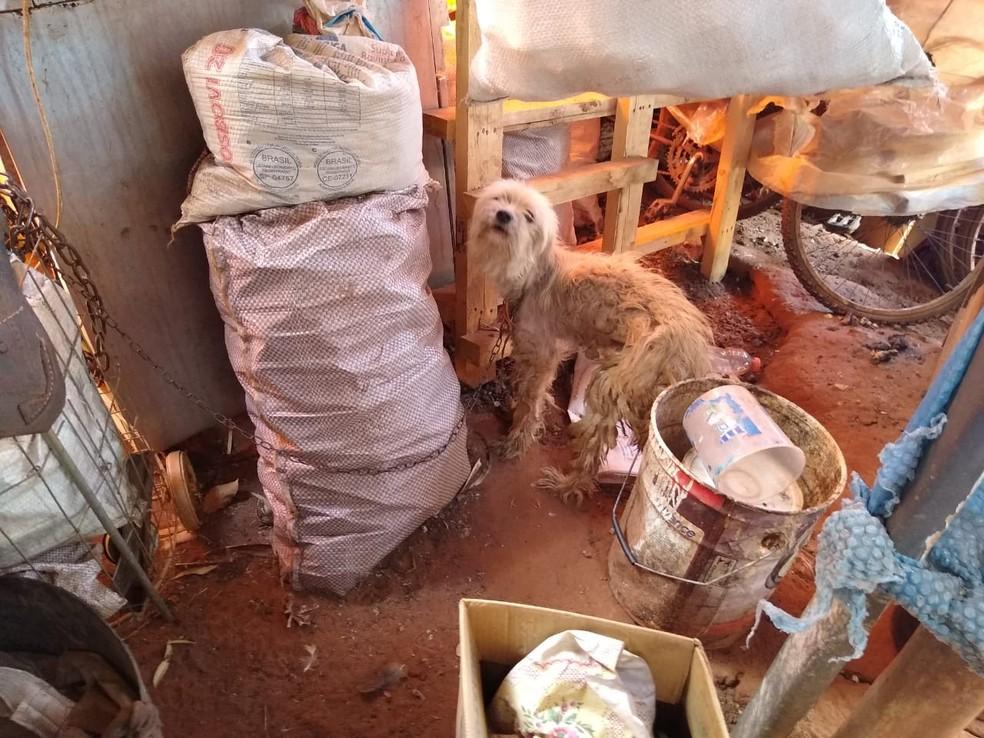 Dono do local foi preso em flagrante pelo crime de maus-tratos a animais  — Foto: Guarda Civil Municipal / Divulgação