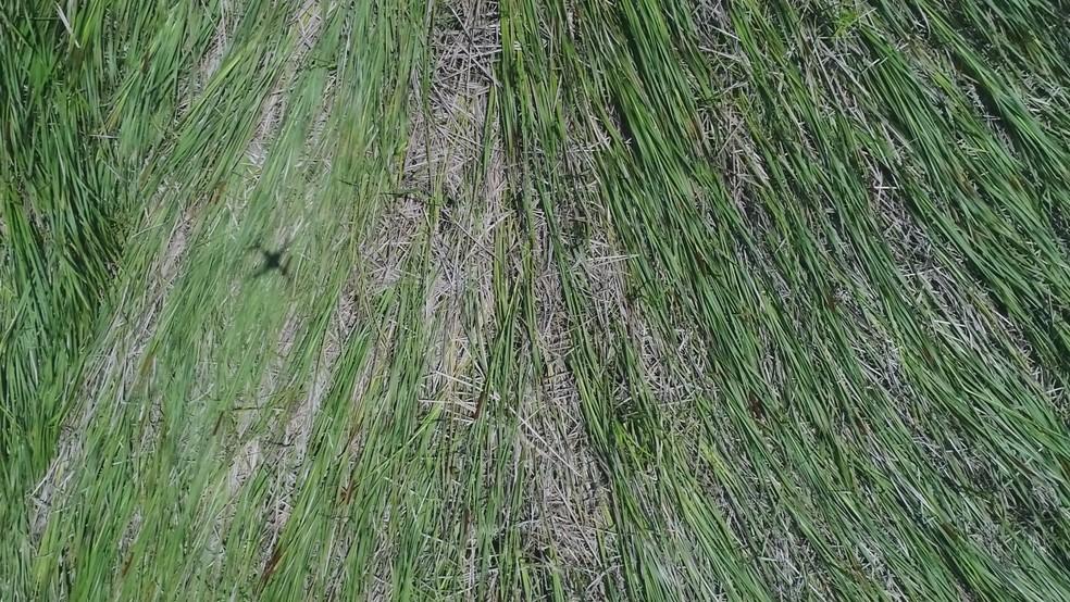 Vegetação foi amassada, segundo pesquisador que analisa a área (Foto: Edilson Almeida/Prefeitura de Peruíbe)
