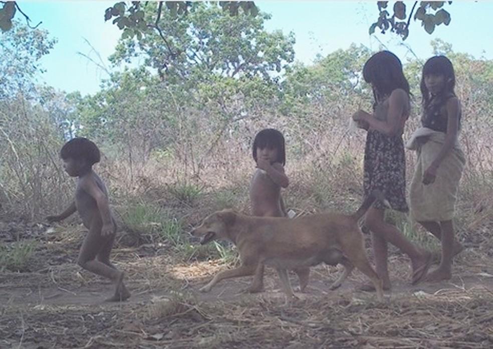 Crianças indígenas e cachorros das aldeias costumam passear nas áreas em torno das comunidades — Foto: Funai