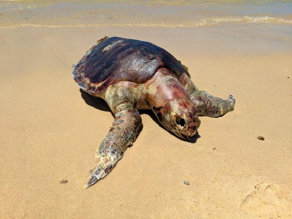 Tartaruga morta encontrada na Barra de São Miguel, AL — Foto: Dennys Rafael/ Arquivo Pessoal