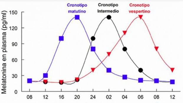 Gráfico mostra a melatonina liberada em nosso corpo em função da hora do dia e como isso determina os diferentes cronotipos (Foto: INSTITUTO INTERNACIONAL DE MELATONINA via BBC )