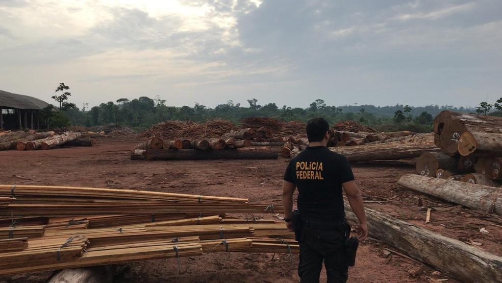 Polícia Federal localizou oito madeireiras que operavam clandestinamente no Pará, durante a Operação Tembém II. — Foto: Divulgação / Polícia Federal