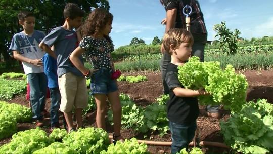 Crianças vão ao campo para aprender sobre alimentação saudável