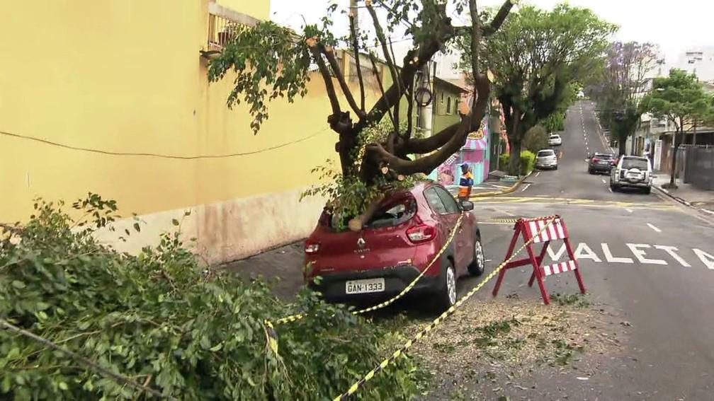Na Rua Amazonas, em São Caetano, árvore cai sobre carro — Foto: Reprodução TV Globo