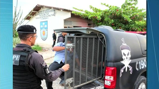 Operação prende suspeitos de fraudar licitações em prefeituras do Sertão de Alagoas