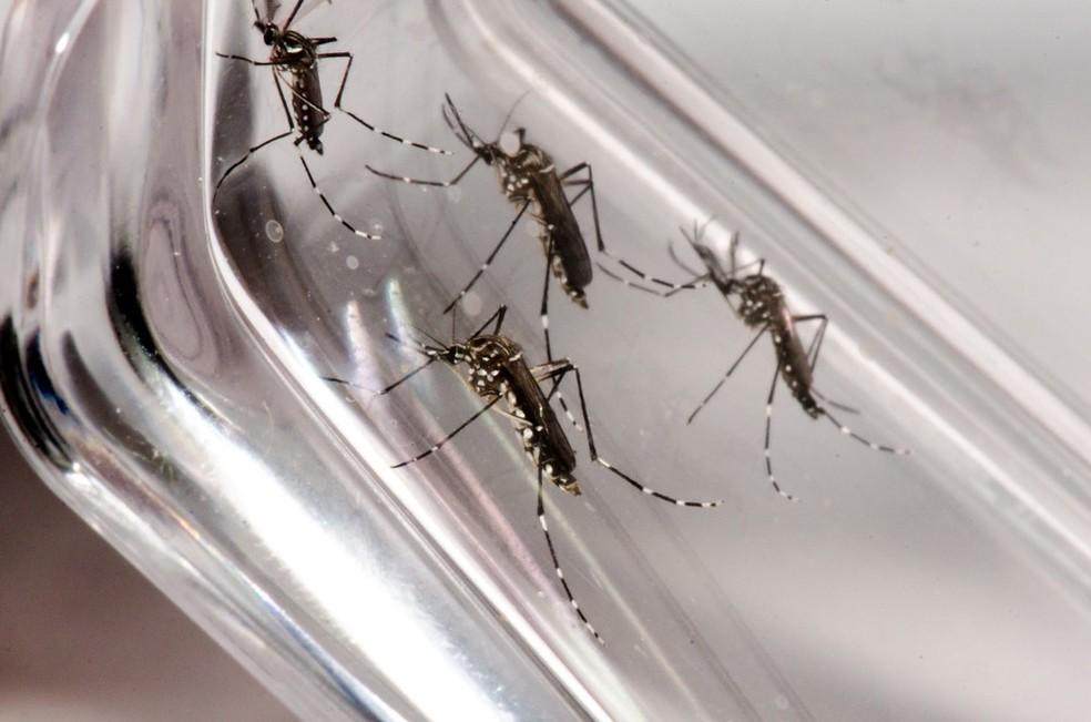 Juiz de Fora tem 1.390 casos prováveis de dengue, conforme último boletim divulgado pela Secretaria de Estado de Saúde — Foto: Rodrigo Méxas e Raquel Portugal/Fundação Oswaldo Cruz/Divulgação