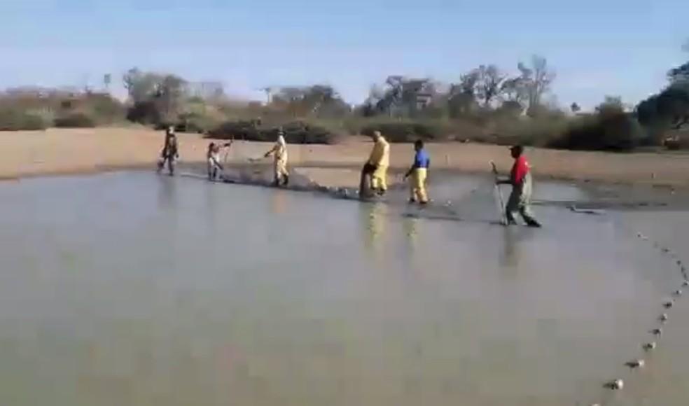 Peixes resgatados de lagoas secas — Foto: Divulgação/Ibama