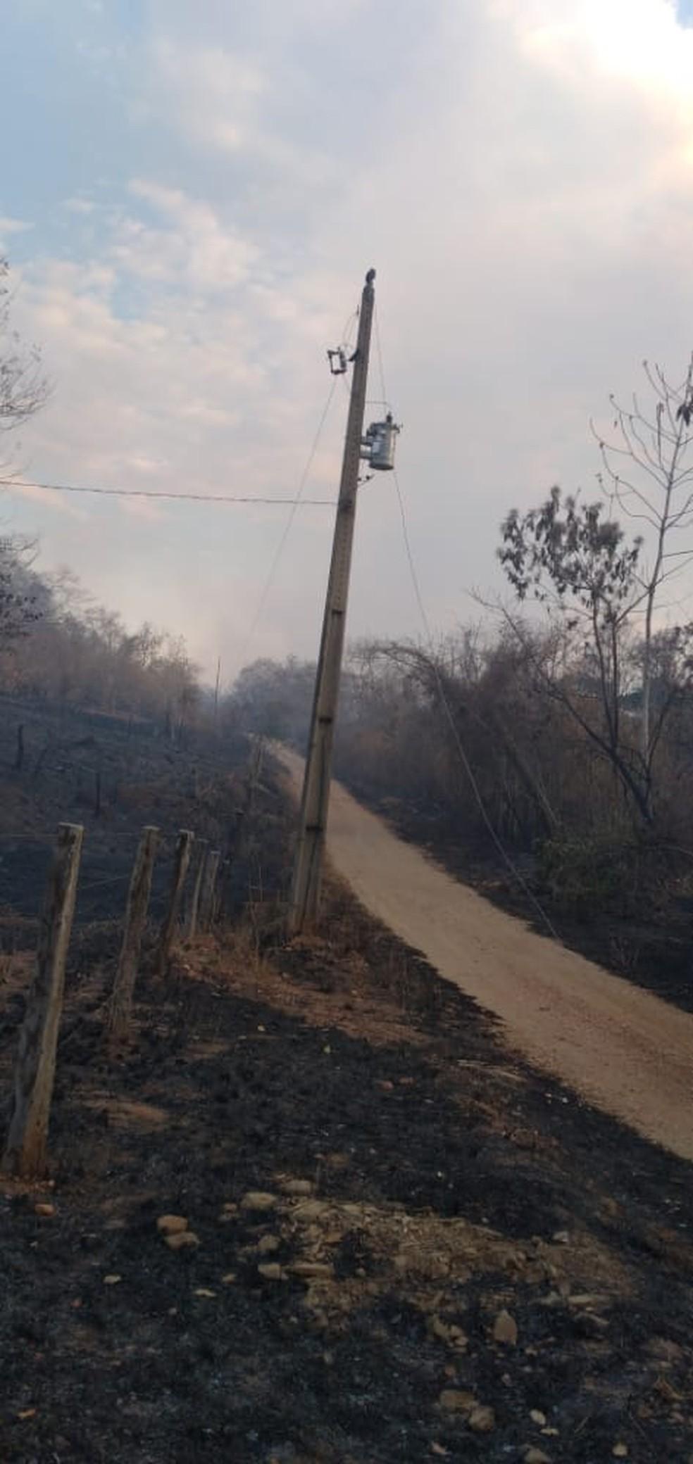 Árvore caiu sobre a fiação elétrica. — Foto: Energisa