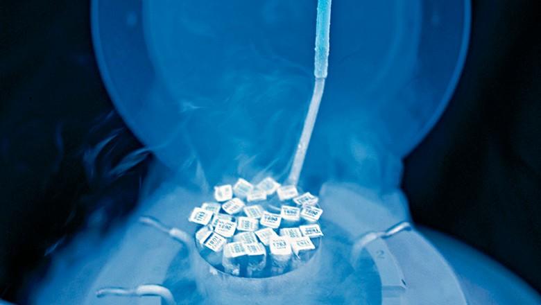 Botijão acondiciona ampolas de sêmen para inseminação artificial de gado (Foto: divulgação)