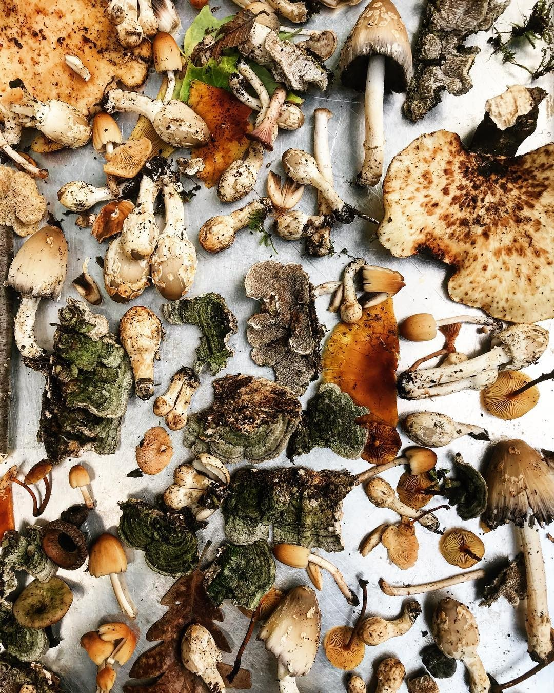 Cogumelos crus são um dos principais ingredientes no livro de Johnna Holmgren (Foto: Reprodução/FoxMeetBear)