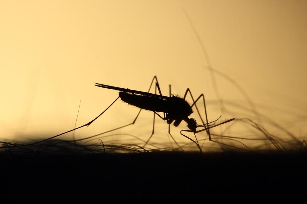 Mosquito: dengue, zika e chikungunya são transmitidas pelo Aedes Aegypti; febre do mayaro, pela picada de Haemagogus — Foto: Emphyrio/Pixabay