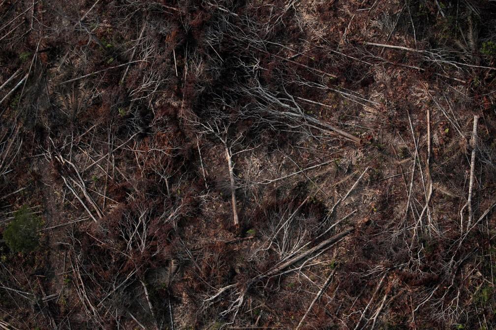 Foto aérea mostra uma parcela desmatada da Amazônia perto de Porto Velho nesta quinta-feira (22) — Foto: Ueslei Marcelino/Reuters