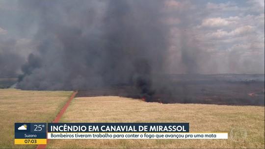 Incêndio em canavial de Mirassol