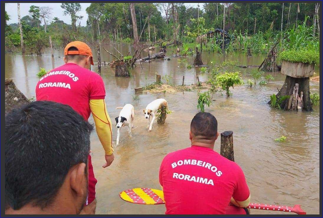 Cachorros são resgatados pelos Bombeiros após ficarem três dias ilhados em Rorainópolis, Sul de RR