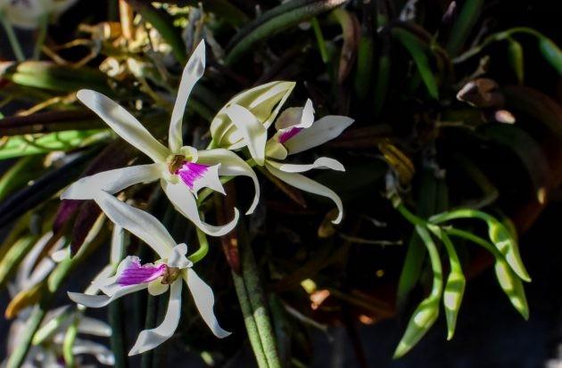 Jardim Botânico recebe mais de 150 orquídeas em Juiz de Fora  - Notícias - Plantão Diário