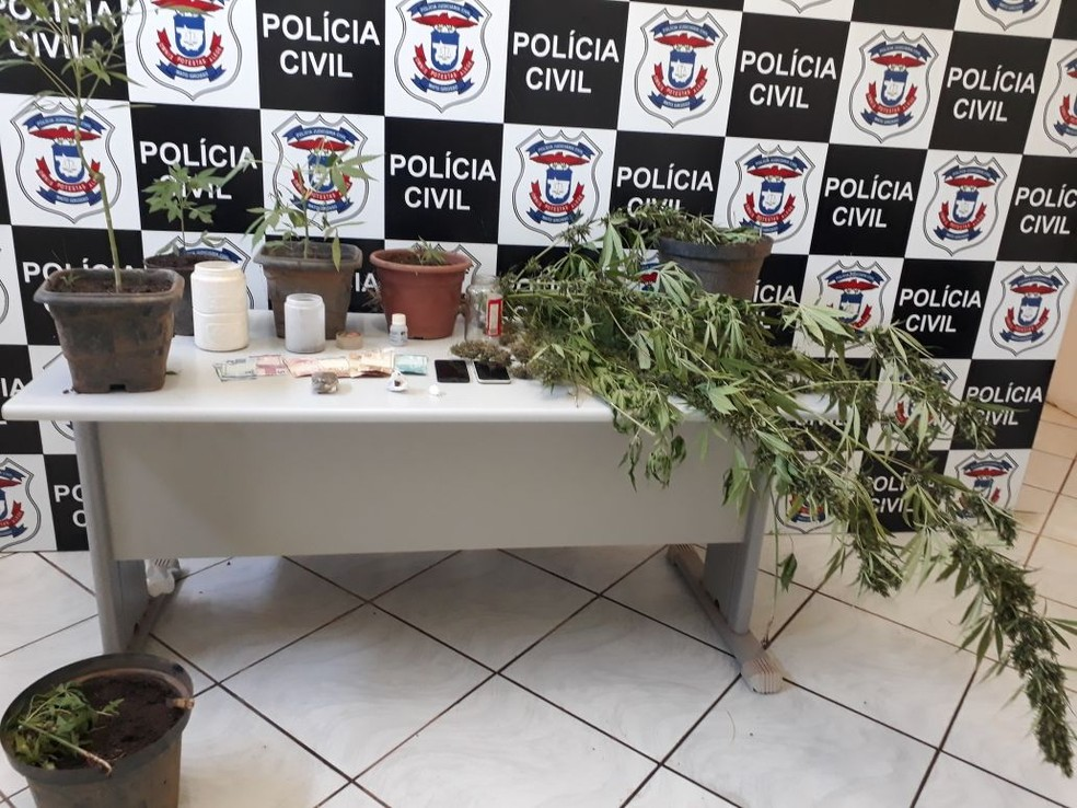 Dois irmãos foram presos nesta quinta-feira (5) com uma plantação de maconha e uma estufa para o cultivo da droga, na zona rural de Paranatinga (Foto: Polícia Civil de MT/Assessoria)