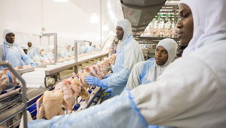 aves-frigorifico-abate-cascavel-coopavel (Foto: Marcelo Min/Ed. Globo)