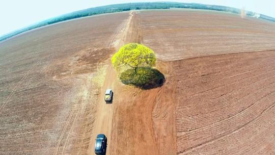 O processo de reflorestamento da Amazônia após desmatamentos
