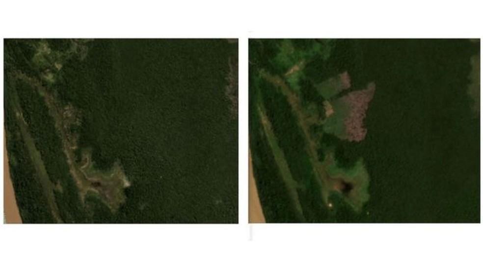 Imagens de satélite mostram lote anunciado por Fabrício Guimarães em maio de 2020 (à esq.), antes do desmatamento, e em janeiro de 2021 — Foto: Planet Labs