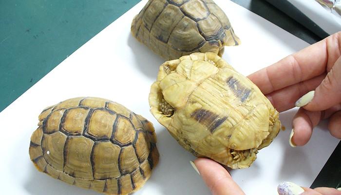 Homem afirmou que tartarugas eram chocolate (Foto: Divulgação)