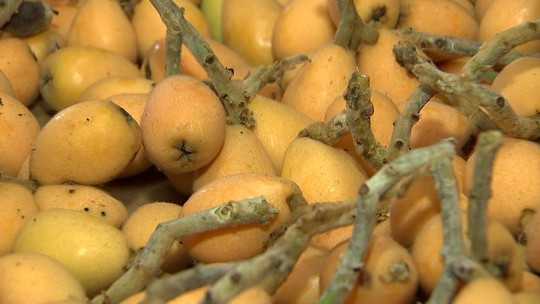 Fruta nêspera está em época de colheita em São Miguel Arcanjo