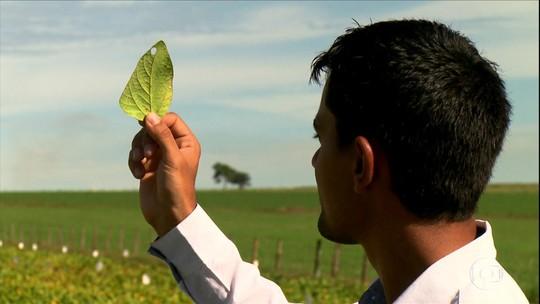 Agricultura e ciência: a aposta de produtores de Goiás