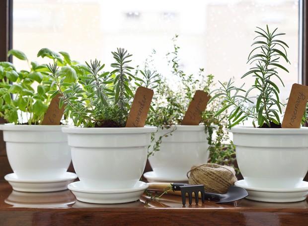 6 segredos de quem sabe manter as plantas sempre lindas