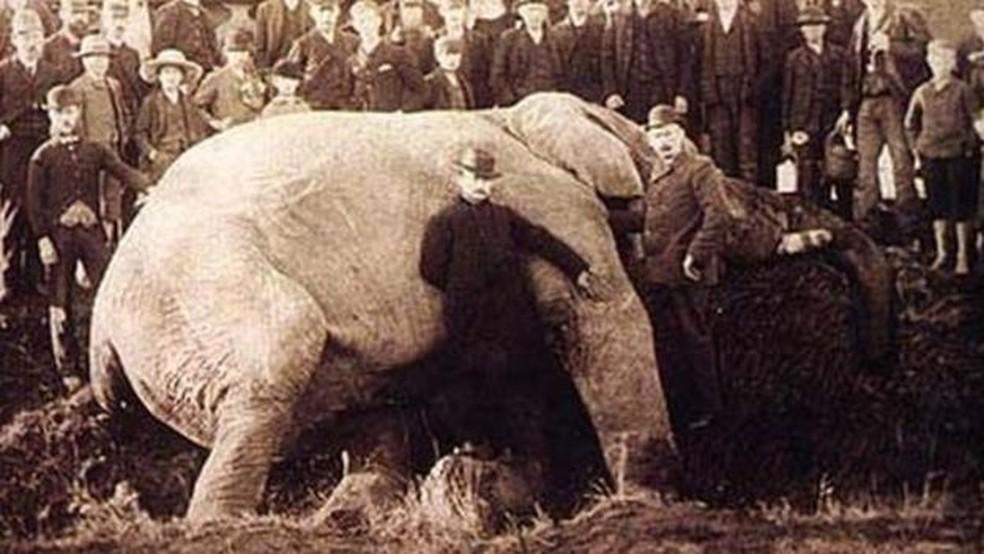 Matthew Scott, o cuidador de Jumbo, aparece junto às orelhas do elefante em foto tirada após a morte do animal  (Foto: Wiki Commons)