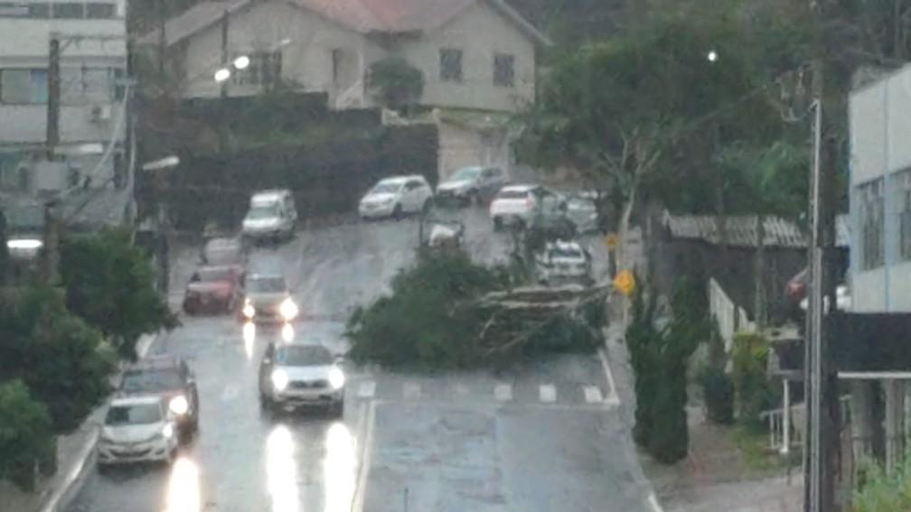 Queda de árvore em Xanxerê — Foto: Corpo de Bombeiros/ Divulgação