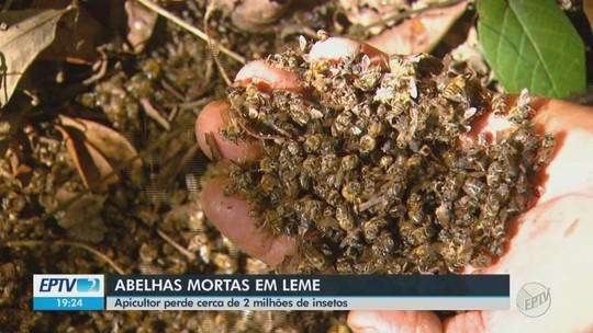 Apicultor de Leme perde 2,5 milhões de abelhas com suspeita de contaminação por agrotóxico