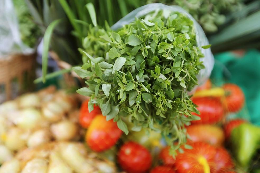 Produtos orgânicos produzidos pela agricultura familiar — Foto: Mateus Pereira / GOVBA