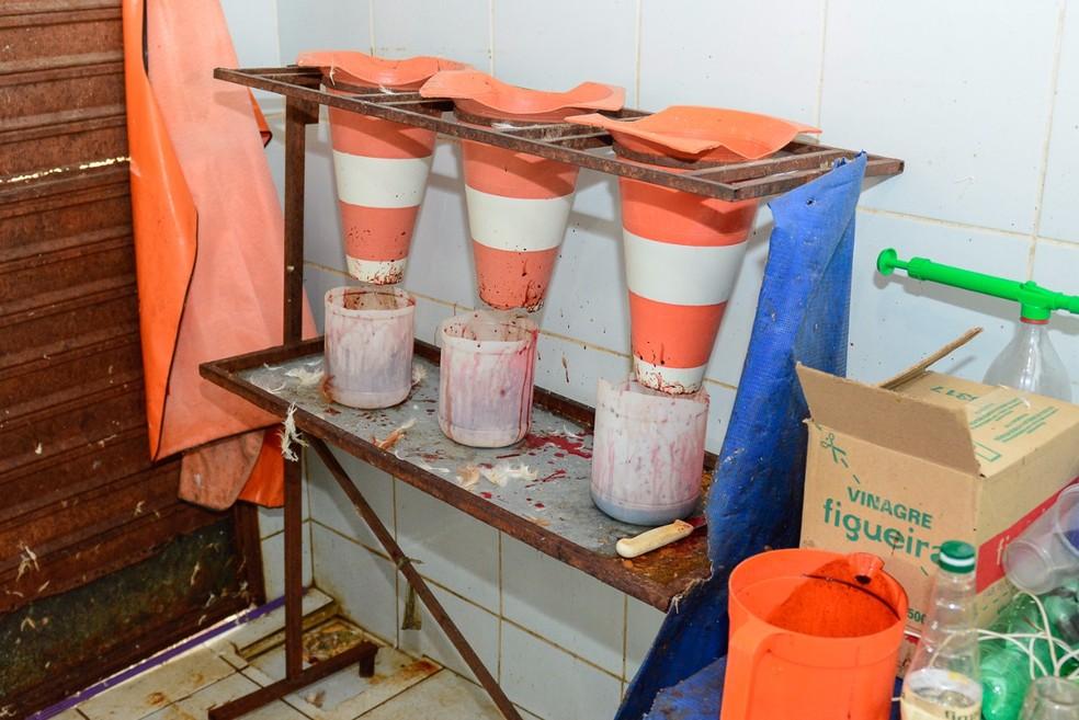 Cones de trânsito eram usados como instrumento no abate das galinhas (Foto: Eduardo Andrade/Divulgação/Vigilância Sanitária de Boa Vista)