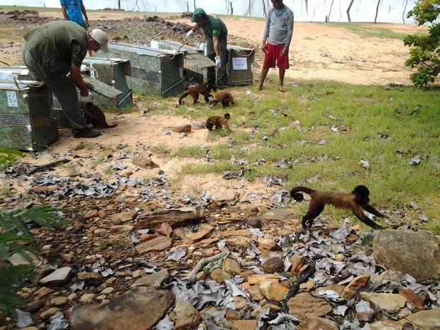 Animais soltos no Piauí serão monitorados pelo Ibama (Fot Rennan Nunes/Tv Clube)
