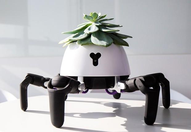 Robô Hexa, criado pela startup Vincross, para levar plantas até o sol (Foto: Divulgação/Forum Vincross)