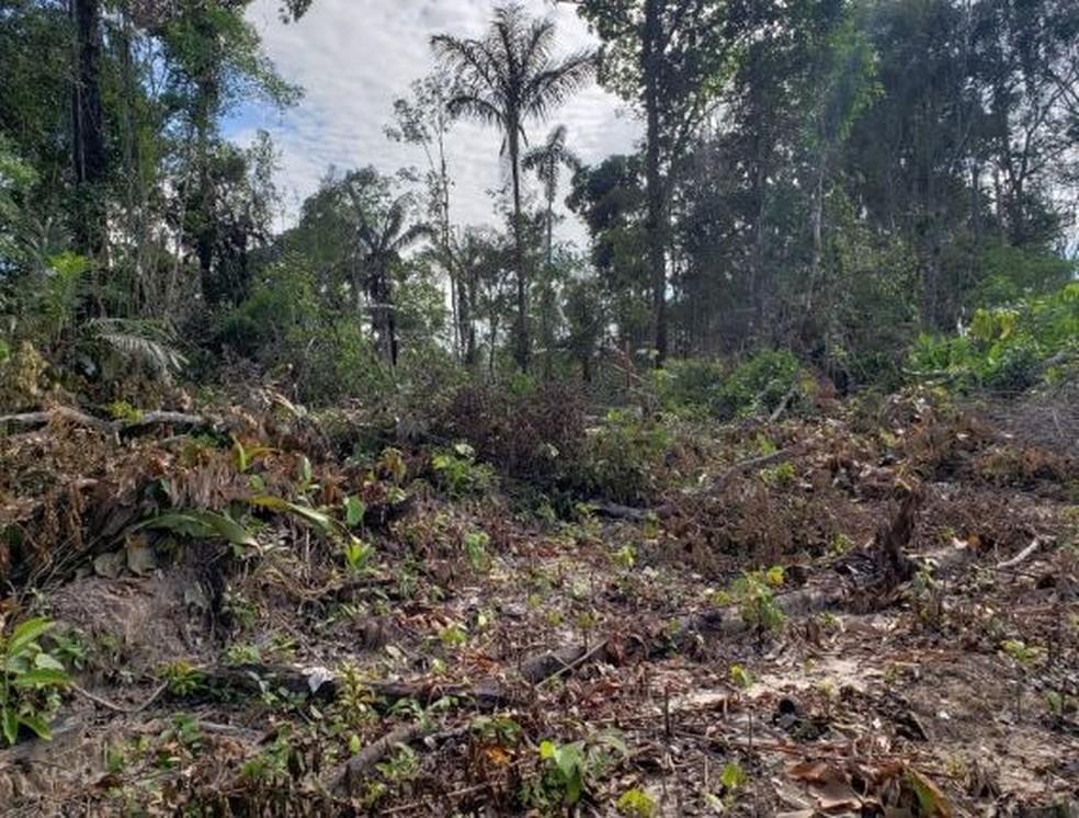 Desmatamento no Acre em abril aumentou 67% em um ano, aponta Imazon — Foto: Divulgação/PF-AC
