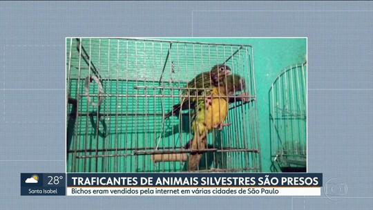 9 pessoas são presas em operação contra o tráfico de animais silvestres