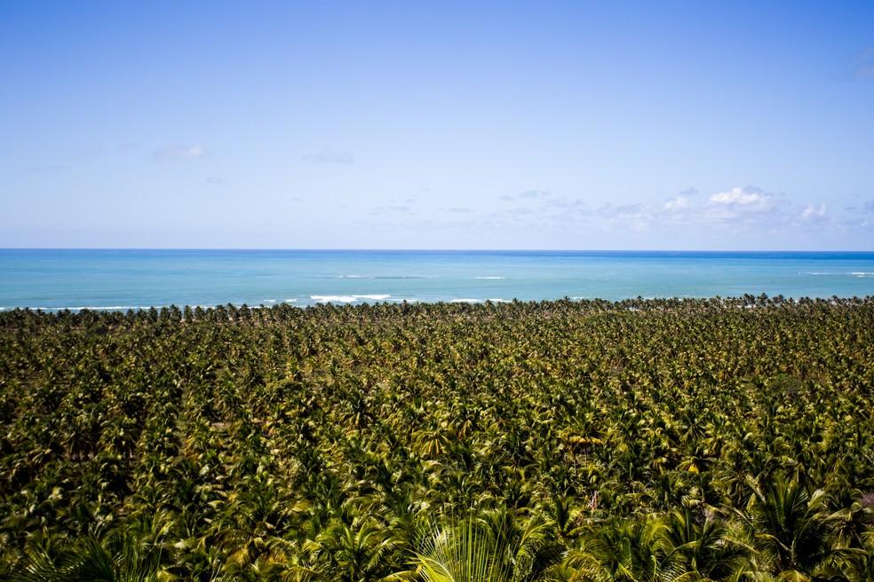 Extenso coqueiral é um dos atrativos da praia do Gunga — Foto: Jonathan Lins / G1