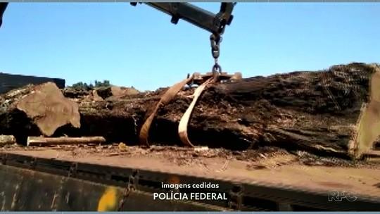 Polícia Federal e ICMBio flagram desmatamento no Parque Nacional do Iguaçu