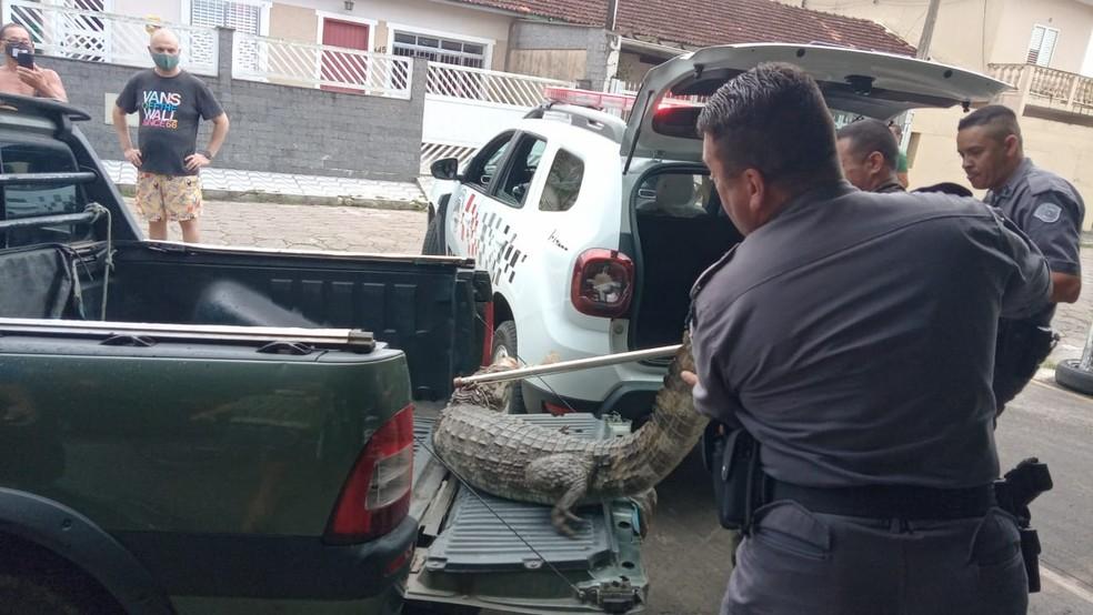 Animal foi retirado de estacionamento por policiais militares em Cananéia, SP — Foto: Arquivo Pessoal/Johnson de Oliveira Pereira